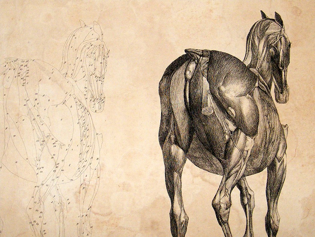 Stubbs horse illustration
