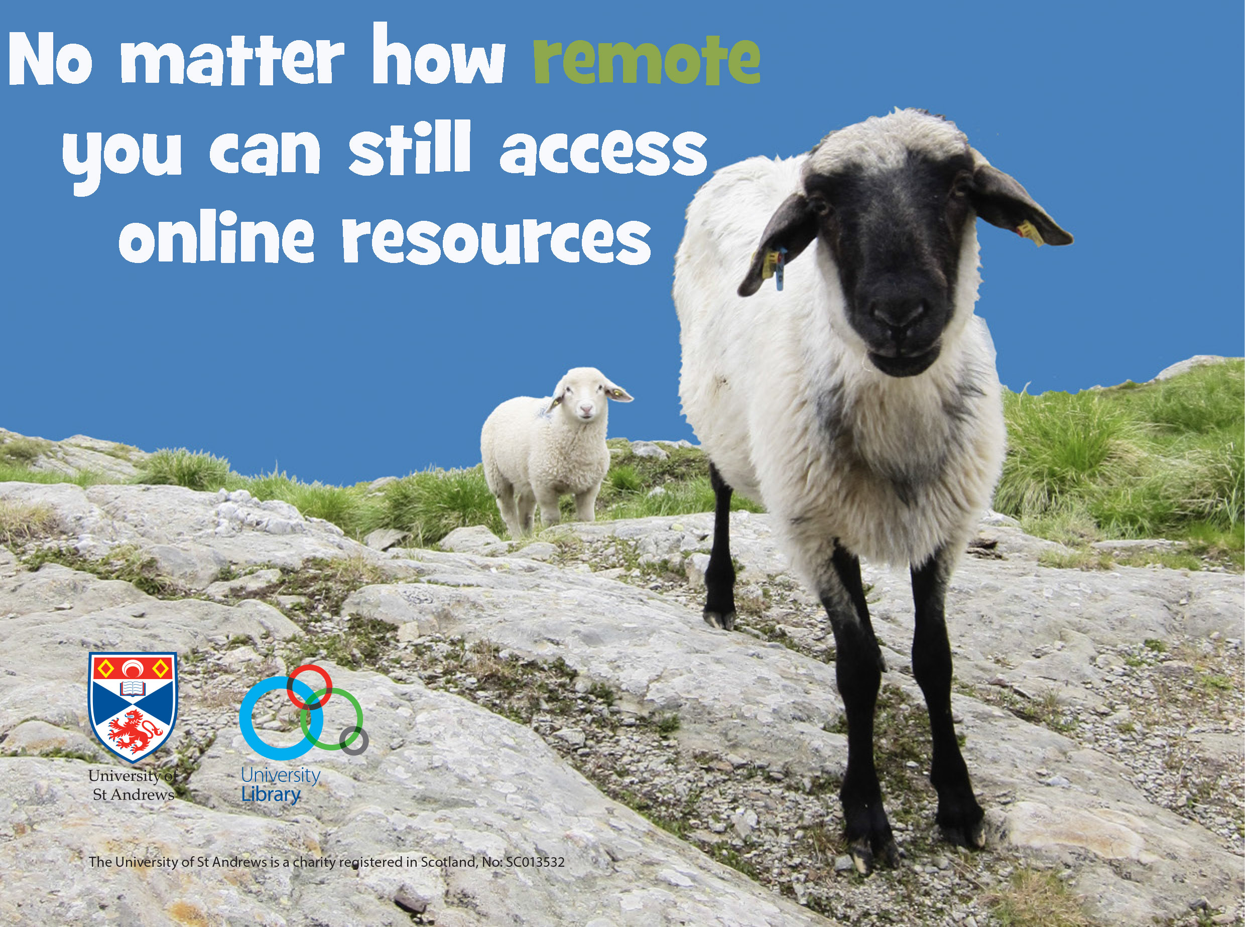 No matter how remote you can still access online resources.  Image of sheep on a hillside.
