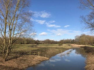 A photo of the river running through the nature reserve next to the Chelmsford campus.