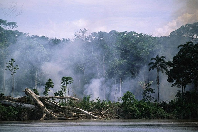 Deforestation - smoke from fires in Amazon rainforest along river bank, Ecuador, South America