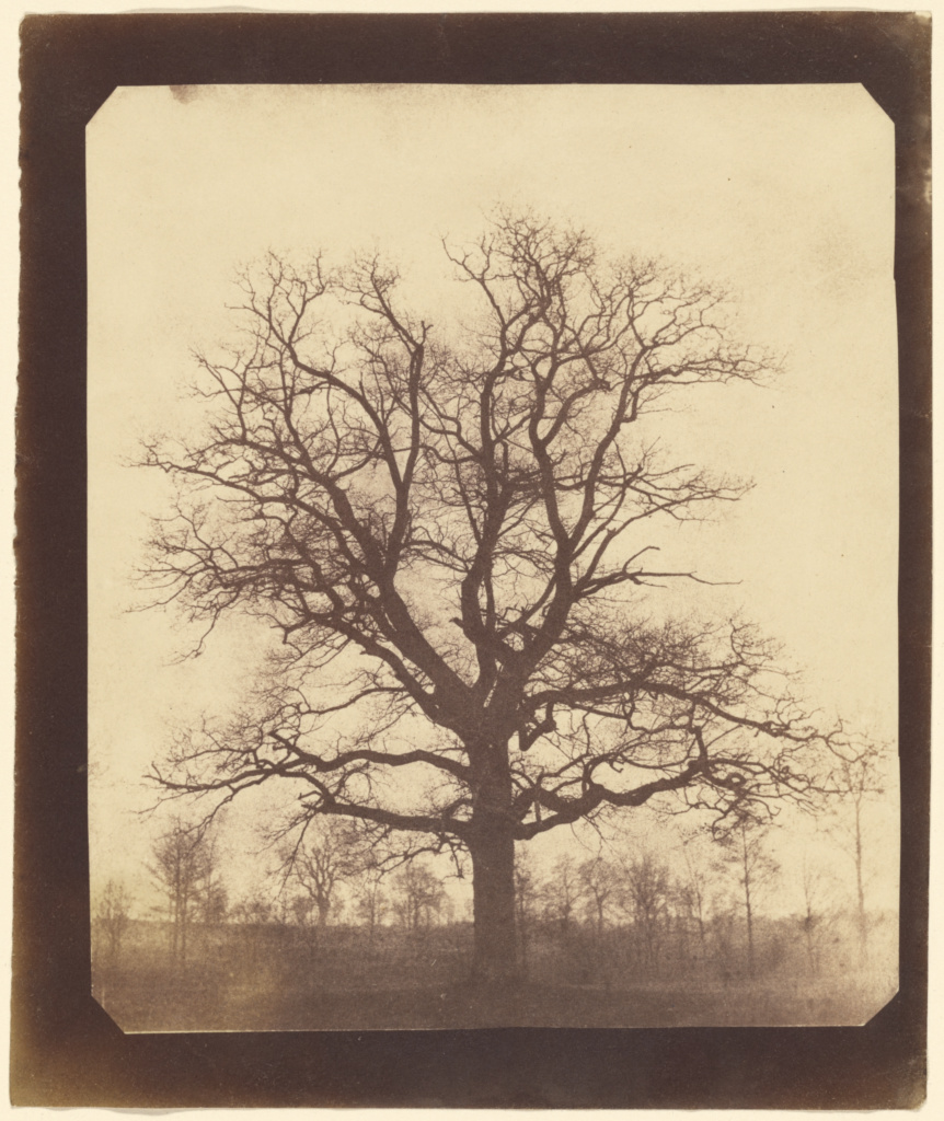 Fox Talbot - A tree in winter