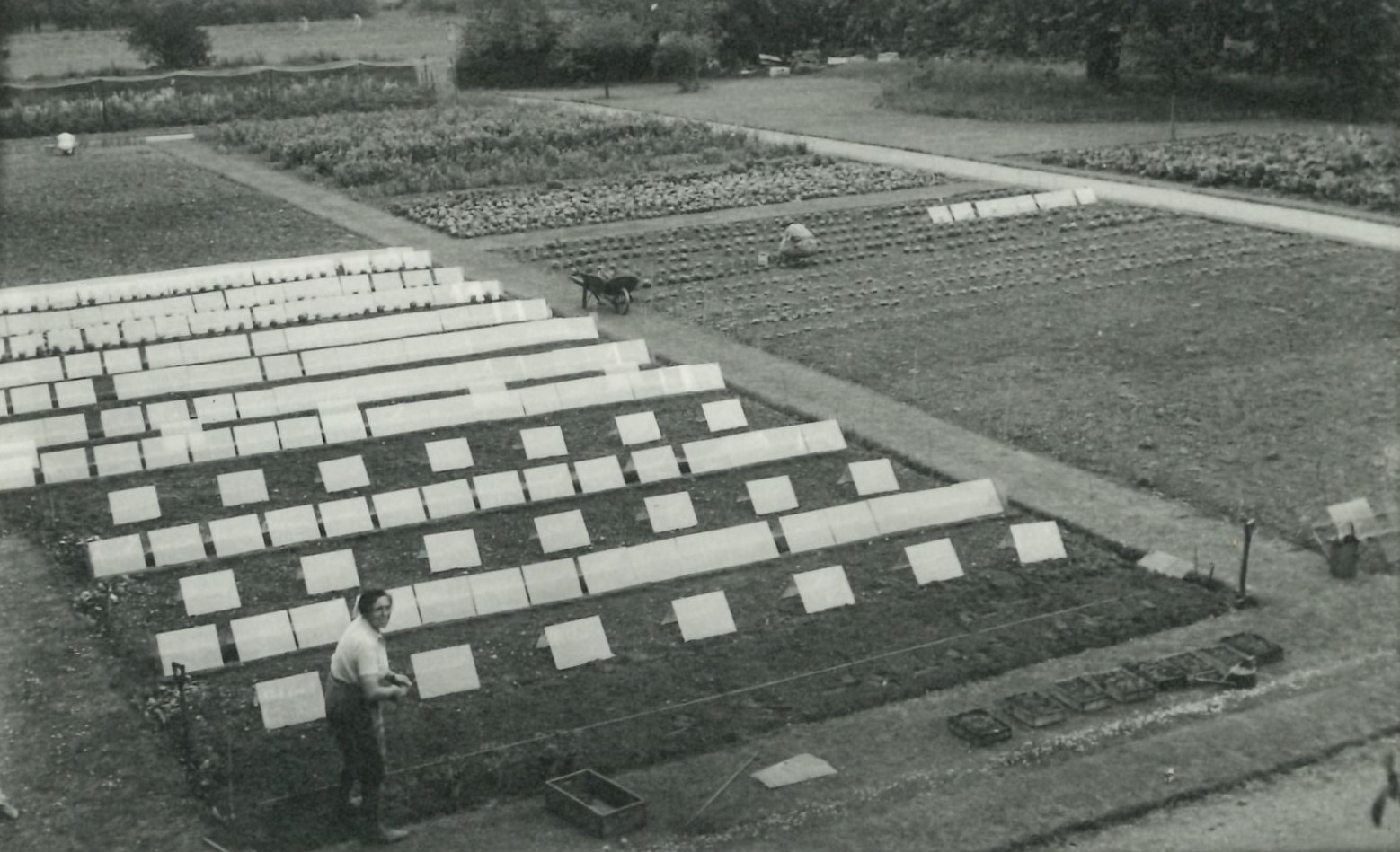 Monochrome photograph of a vegetable patch in LMH gardens.