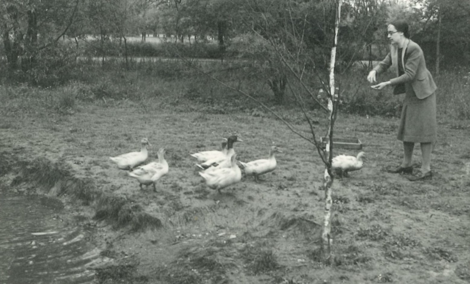 Monochrome photograph of feeding ducks in LMH gardens.