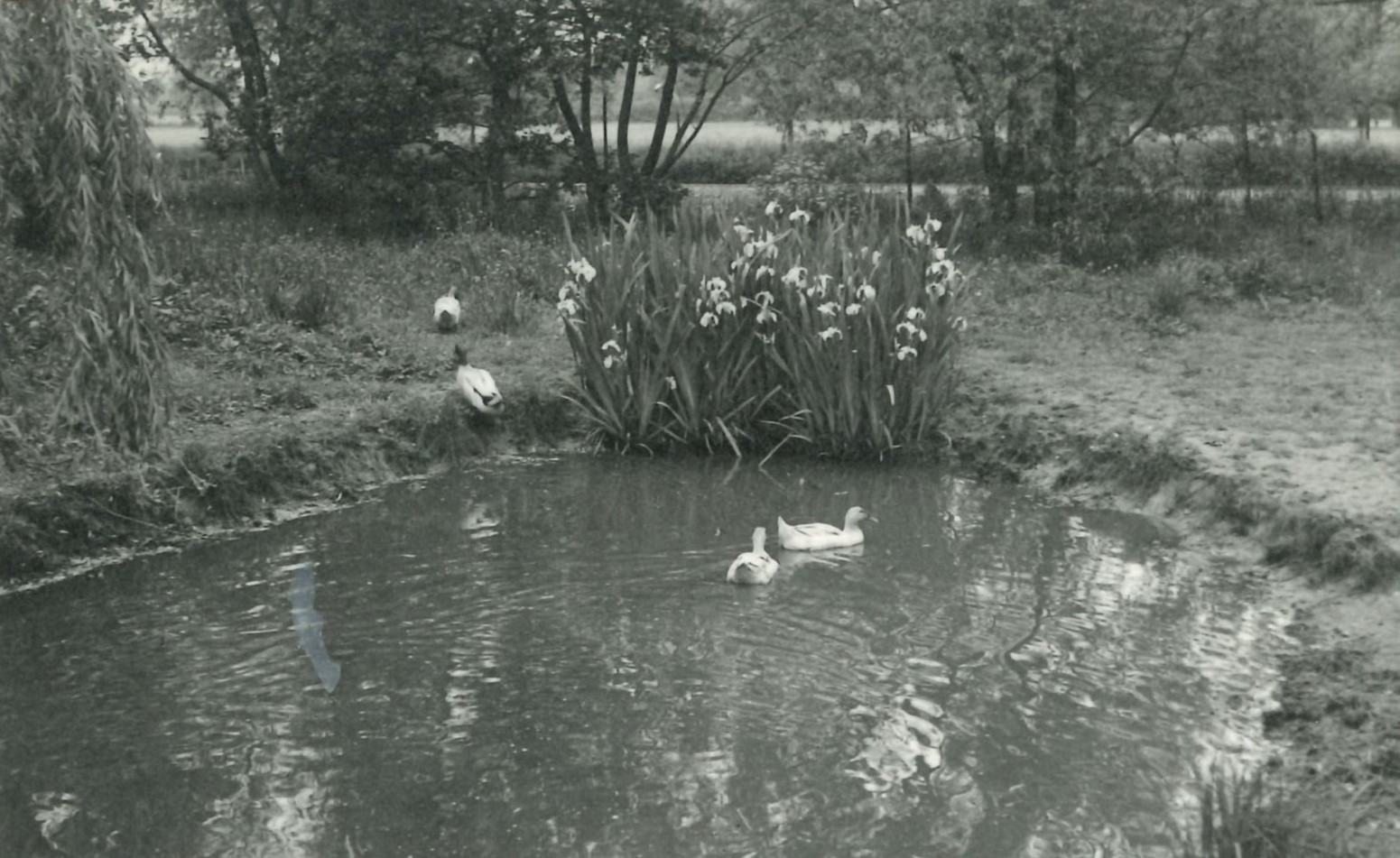 Monochrome photograph of a duck pond at LMH.