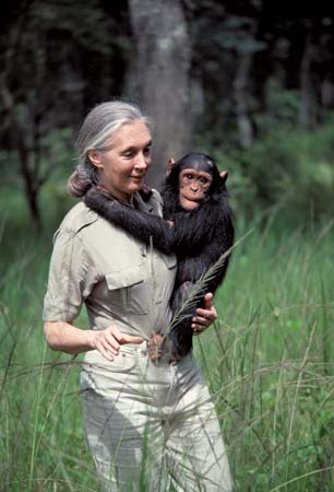 Jane Goodall . image. Britannica School, Encyclopædia Britannica, 19 Feb. 2021. proxy.act.edu:2120/levels/elementary/assembly/view/222786. Accessed 1 May. 2021.