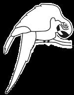 David Nicholls macaw logo