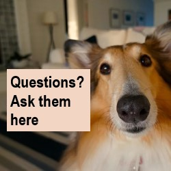 Questions? Ask them here