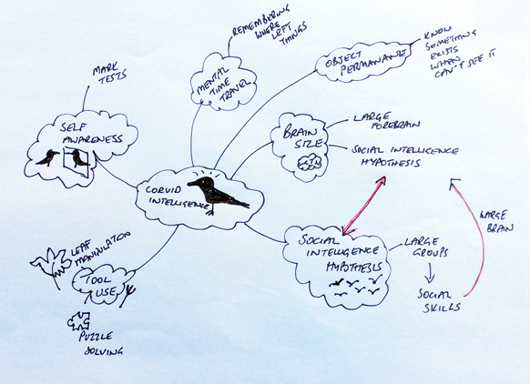 A hand-drawn mind map about corvid intelligence