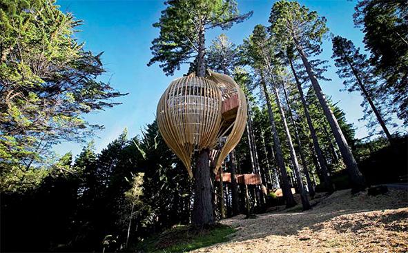 Treehouse restaurant by Hugh Byrd