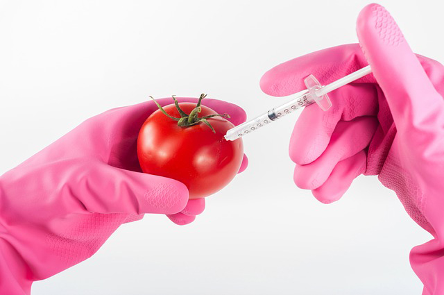 Tomato being injected by someone wearing pink rubber gloves