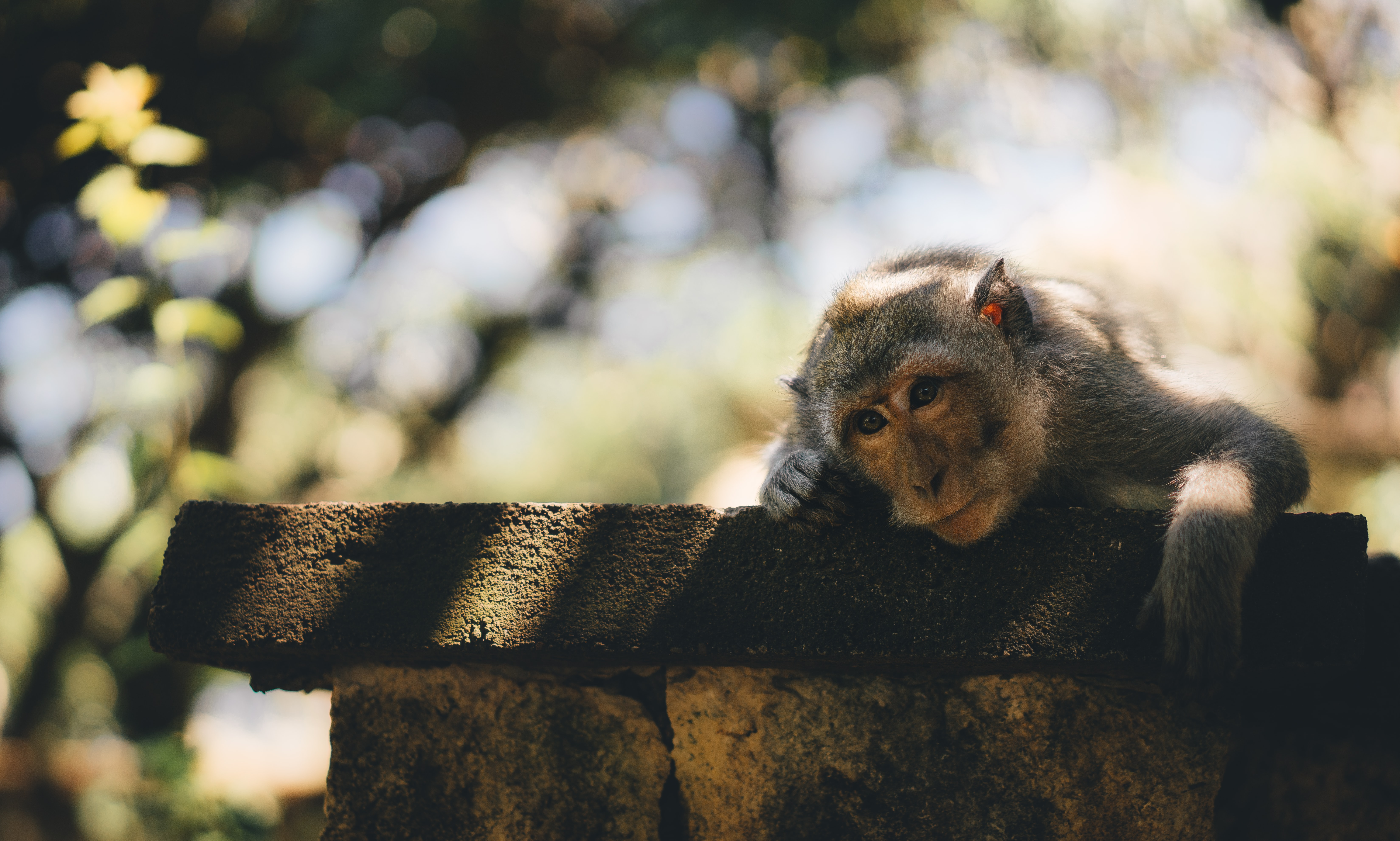decorative image of lonely monkey