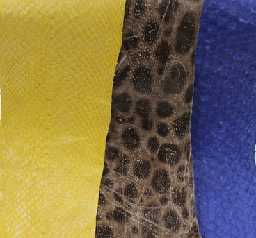 Image of fish leather