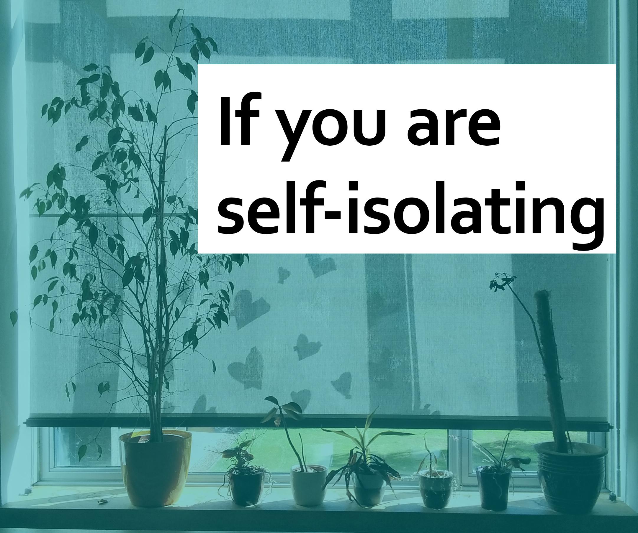 "An image of the MMLL Library window, with plants on the windowseal. ""If you are self-isolating"" text is in the top part of the image"