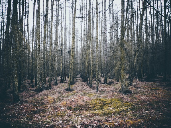 A photograph of a peaceful woodland