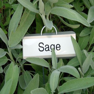 This is the wrong SAGE; you're fired! Ed.