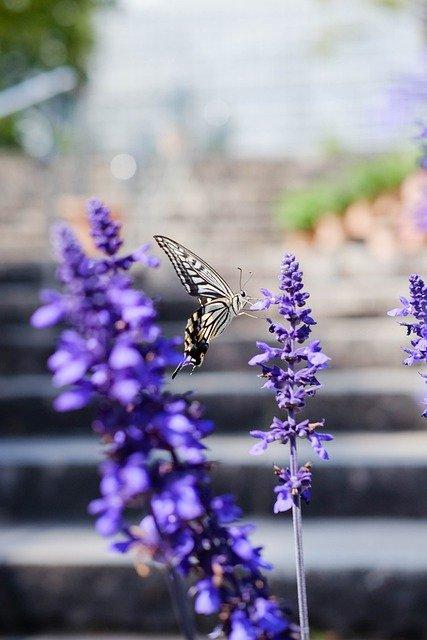 Butterfly alighting on a flower