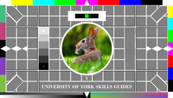 Testcard with a width of 250px