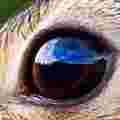 A jpg of the rabbit's eye at 120x120 with a compression quality of 10%. The pixel blocks are clearly visible. There are a lot of blurry artifacts and the image itself is not very clear.