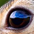 An unlossy close-up of the rabbit's eye at 120x120. The detail of the image is clear.