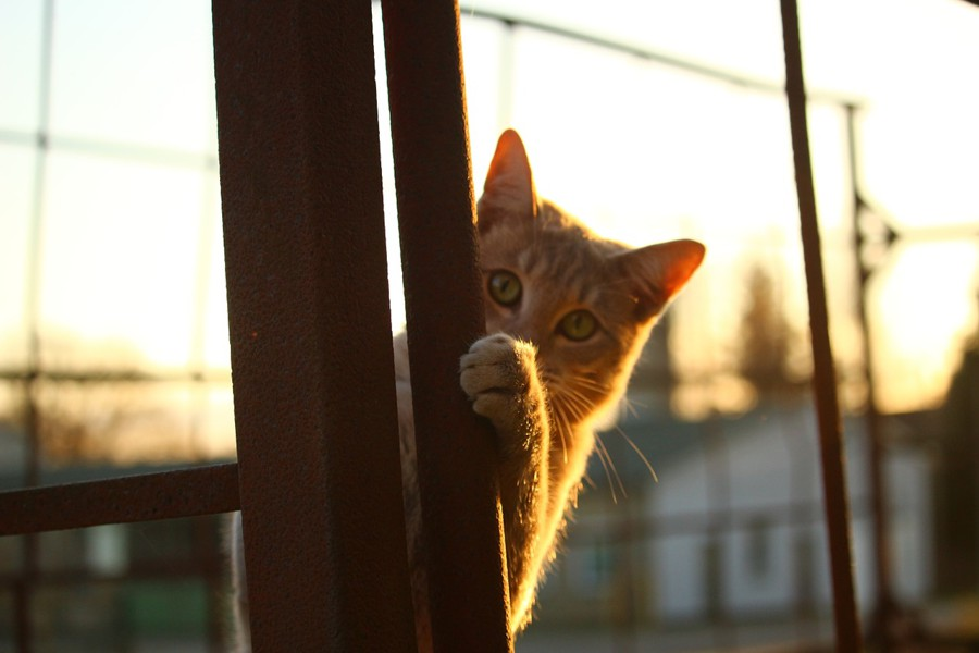 A cat hiding behind a pole