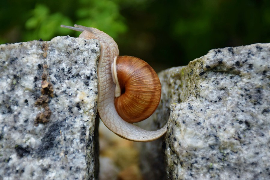 A snail bridges a gap
