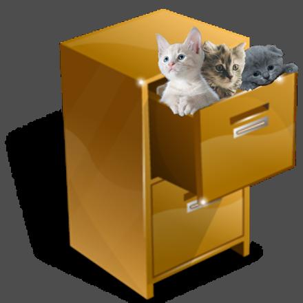 A filing cabinet full of kittens