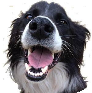 Woofles's avatar