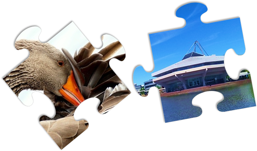 Two jigsaw pieces: one with Central Hall, the other with a face-palming greylag