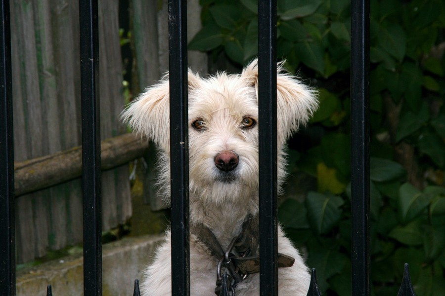 A dog behind bars (don't worry -- it's a CC0 image)