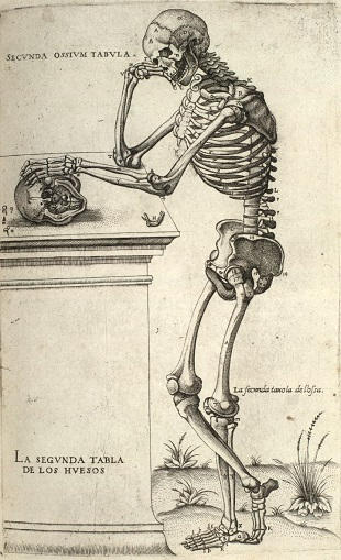 Image of a skeleton learning on a table.  Link to IASH Medical Humanities.