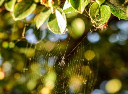 Cobweb in sunshine