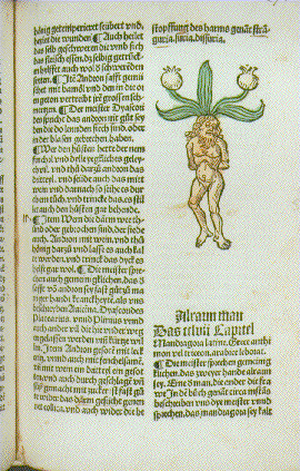 Page of text from Herbarius. Augsburg, Hans Schonsperger,