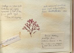 An album containing messages from staff, former students and members of the scientific community, presented to Knight on her 80th birthday (alongside pressed seaweed).