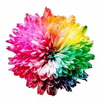 Bild på en flerfärgad blomma.