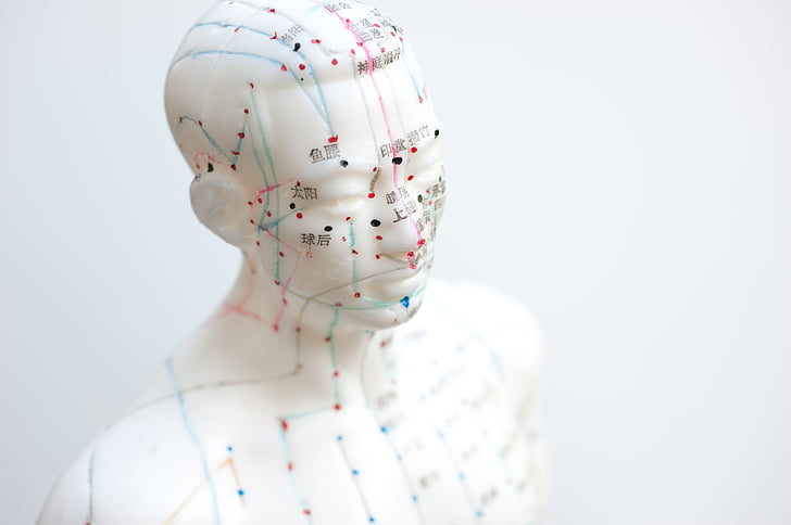 acupuncture-male_model_bust