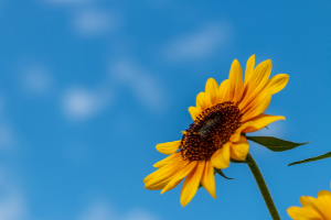 An image of a bright sunflower against a light blue sky. Click here to find out about what we offer for students registered with our DDS service