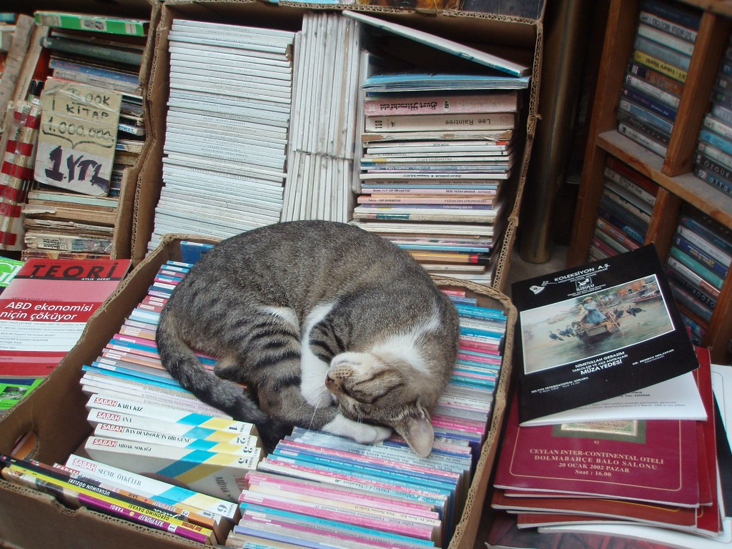 The bookseller's cat