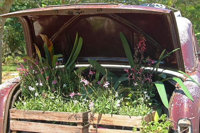 vintage car with plants in boot