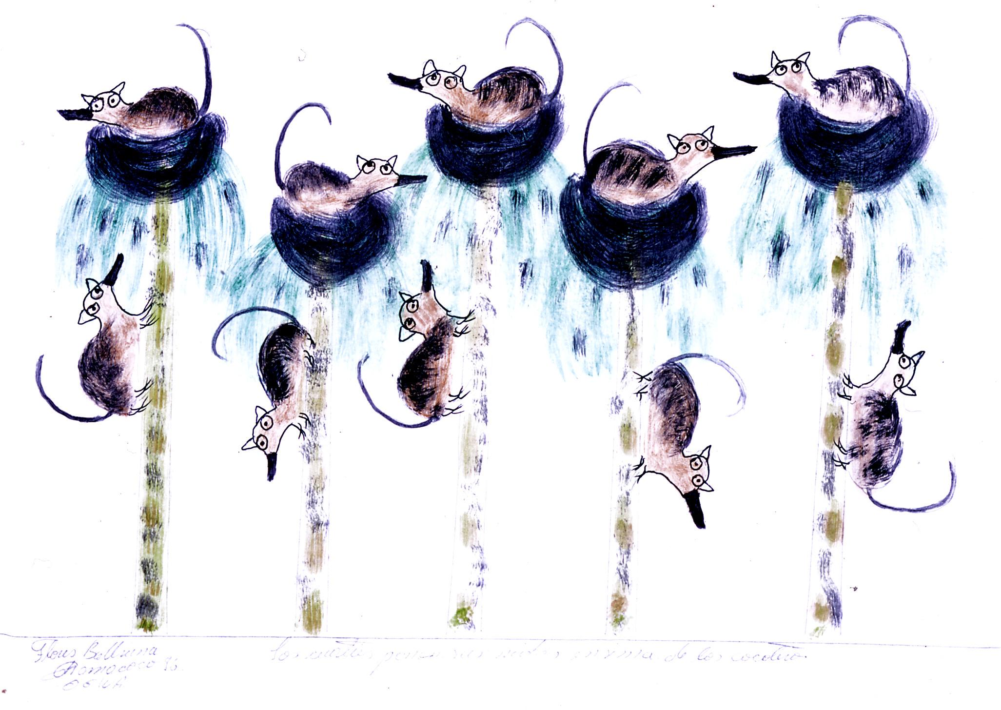 Ogwa 'Los cuaties ponen sus nidos encima de los cocoteros' 1996
