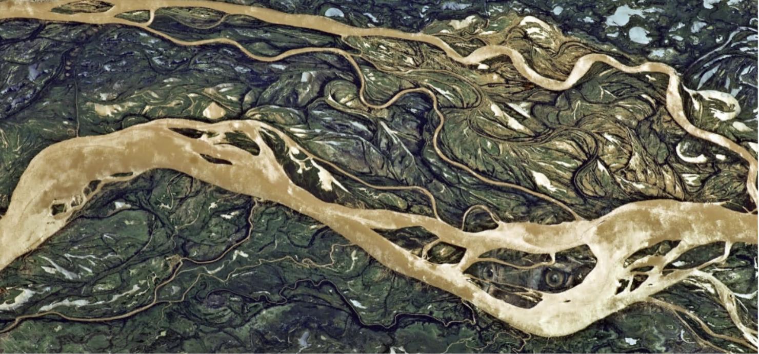 Carolina Caycedo 'Serpent River Book' (detail)